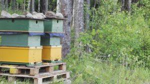 Mehiläiset